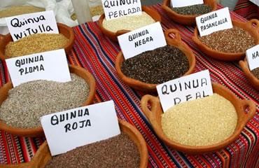 quniua-variedades