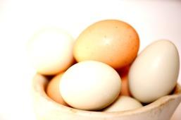 huevos-organicos